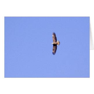Eagle at Conowingo Dam Greeting Card