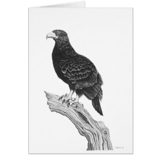 Eagle - Blank Note Card
