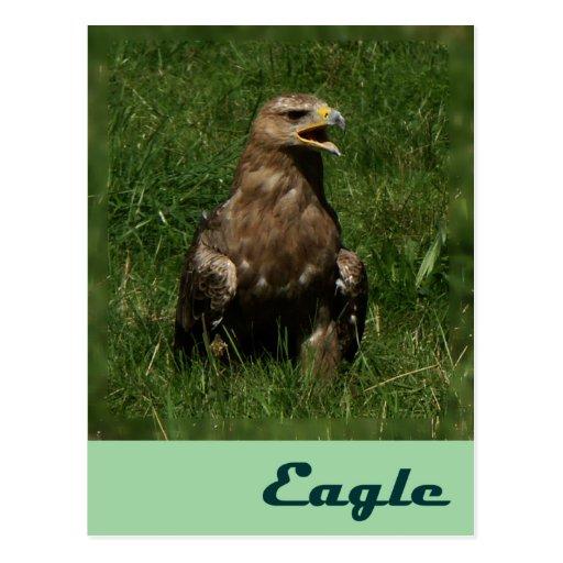 Eagle card postcard
