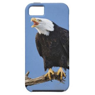 Eagle chauve appelant, Homer, Alaska, Haliaetus iPhone 5 Cases