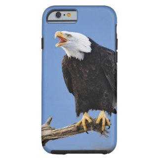 Eagle chauve appelant, Homer, Alaska, Haliaetus Tough iPhone 6 Case