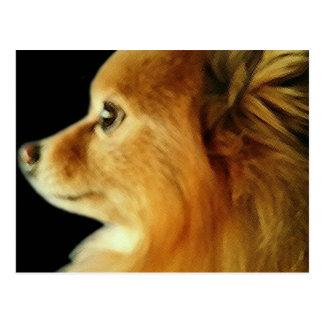 Eagle Eyed Pomeranian Postcard