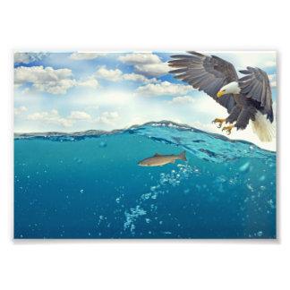 Eagle fishing photo