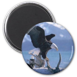 eagle fly2 6 cm round magnet