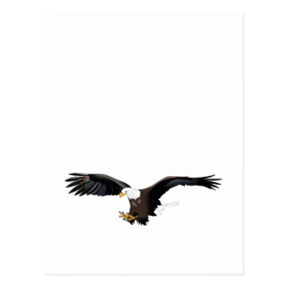 EAGLE IN FLIGHT POSTCARD