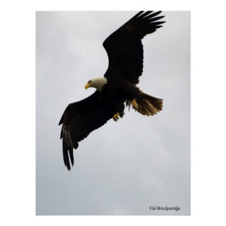 """""""Eagle In Flight"""" Poster"""