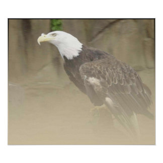 Eagle in the Mist Poster