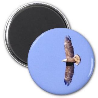 Eagle Over Conowingo Magnet