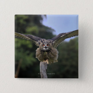 Eagle Owl (Bubo bubo) 15 Cm Square Badge