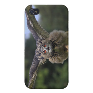 Eagle Owl (Bubo bubo) Covers For iPhone 4