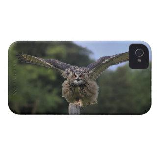 Eagle Owl (Bubo bubo) iPhone 4 Covers