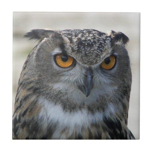 Eagle Owl Ceramic Tile