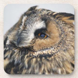 Eagle Owl Cork Coaster