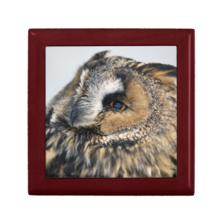 Eagle Owl Gift Box