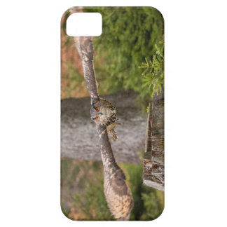 Eagle Owl in Flight Barely There iPhone 5 Case