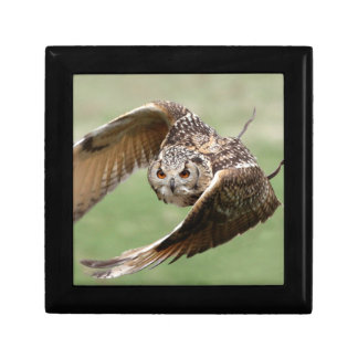 Eagle Owl In Flight Gift Box