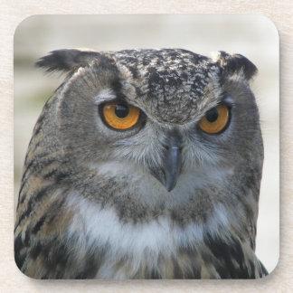 Eagle Owl Photo Coaster Set