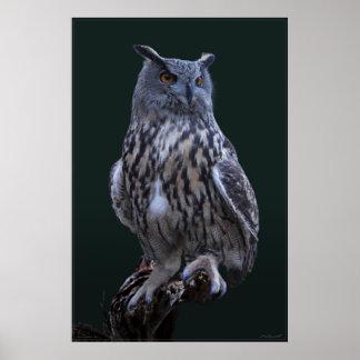 Eagle Owl Photo Poster