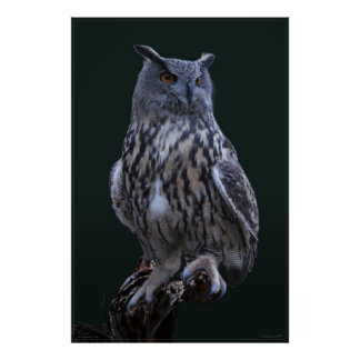 Eagle Owl Photo Poster -24x36 -smaller available