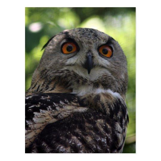 Eagle-owl Postcard
