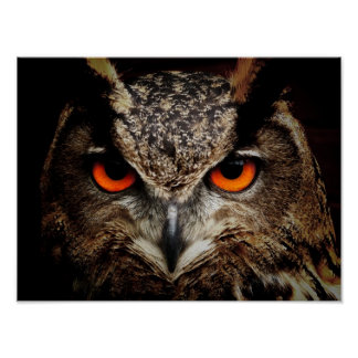 Eagle-Owl Poster