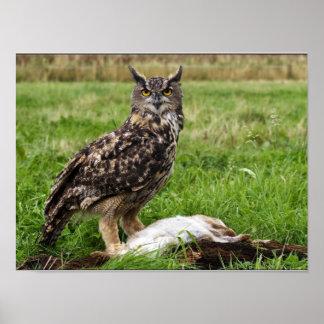 Eagle Owl  Print/Poster Print