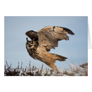 Eagle Owl Takes Flight Greeting Card