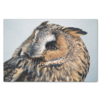 Eagle Owl Tissue Paper