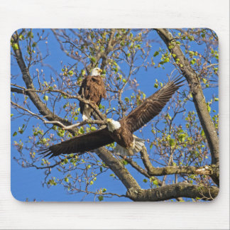 Eagle Pair Mouse Pad