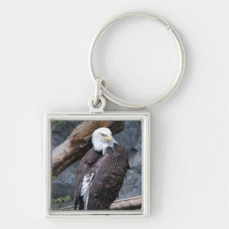 Eagle Perch Keychain