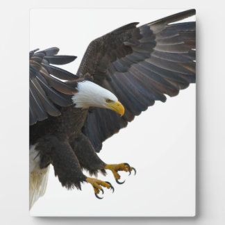 Eagle Photo Plaques