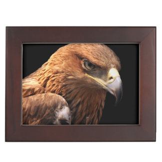 Eagle portrait isolated on black memory boxes