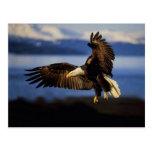 Eagle Postcard 38