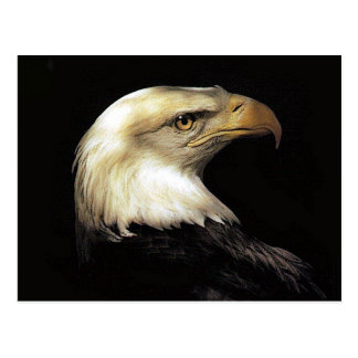 Eagle Postcards