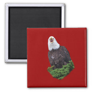 Eagle Screaming Square Magnet