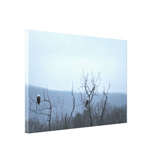 Eagle Watch Gallery Wrapped Canvas