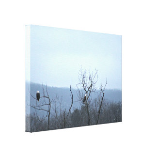 Eagle Watch Stretched Canvas Prints