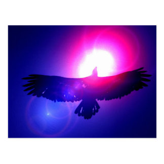 Eagle Wings - Eagle in Flight Postcards