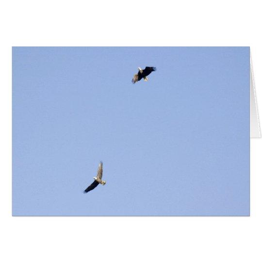 Eagles at Conowingo Dam Card