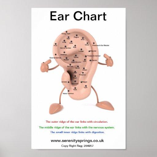 Ear Chart Poster | Zazzle