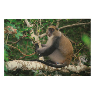 Ear Tagged Samango Monkey Wood Wall Art