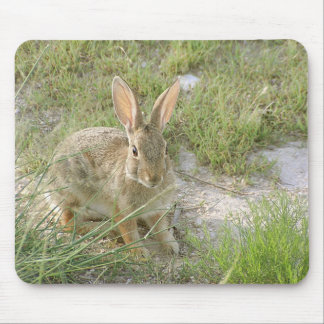 Early Evening Bunny Mouse Mat