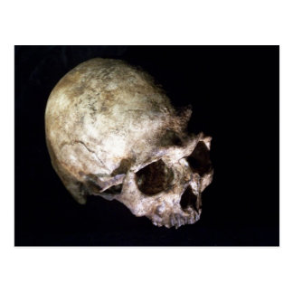 Early human skull postcard