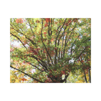 Early Kentucky Autumn Canvas Print