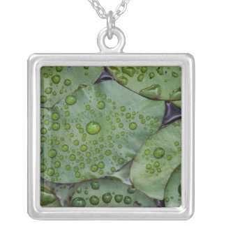 Early morning dewdrops on lily pads, Laurel Silver Plated Necklace