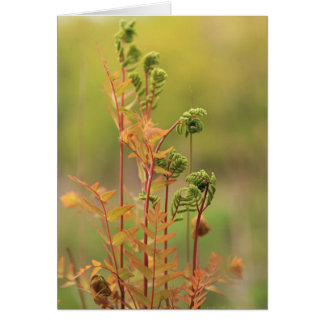 Early morning Ferns Blank Greeting Card