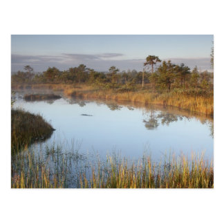 Early morning in Endla Nature Reserve Estonia Postcard