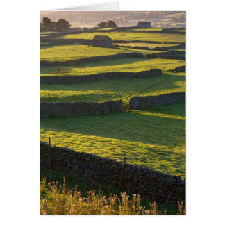 Early morning near Askrigg, Yorkshire Dales Card