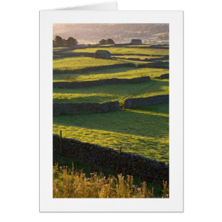 Early morning near Askrigg, Yorkshire Dales Card
