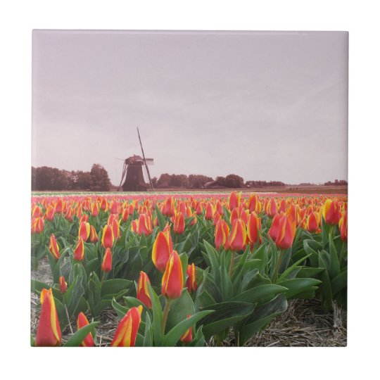 Early Morning Orange Tulip Field Windmill Holland Tile